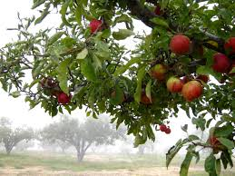 Rileys Pumpkin Patch Oak Glen by Family Friendly Farms Where You Can Pick Your Own Fruit In L A