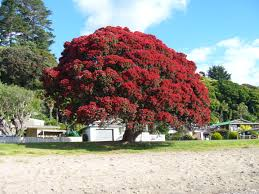 Crab Pot Christmas Trees by 10 Things I Love About New Zealand Christmas Tree Kiwiana And