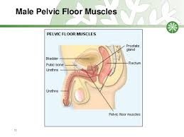 Male Pelvic Floor Relaxation Exercises by Physical Therapy For Constipation Incontinence And General Exercise