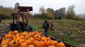 Best Pumpkin Patch Snohomish County by Two Brothers Pumpkins Home Facebook