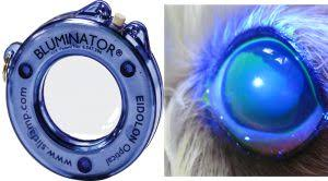 Woods Lamp Examination by Top 5 Mistakes Not To Make With An Ophthalmic Exam Vetgirl Blog