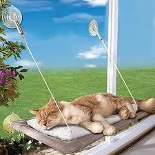 Amazoncom Cat Window Perch Seat Bed Hammock Basking Cat Pads Can