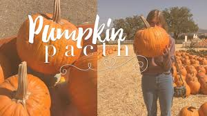 Orlando Pumpkin Patch by Pumpkin Patch Fall 2017 Youtube