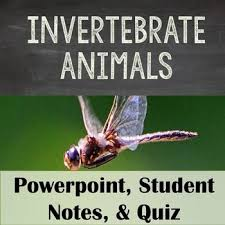 60 best Biology Animals images on Pinterest