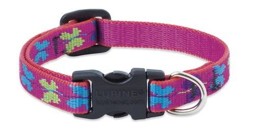 Lupine Wing It Patterned Adjustable Dog Collar - 1/2 in, 6-9in
