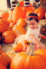 Orlando Pumpkin Patches 2014 by Photography I Love Cards U0026 Design