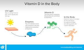 your expert guide to vitamin d