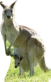 Kangaroo Standing Desk Uk by Kangaroo Standing Desk Uk 28 Images Standing Desk Ergonomic