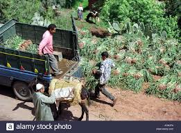 100 Truck Stop Loads A Boy Loads Vegetables Onto A Truck Outside One Of The Many Small