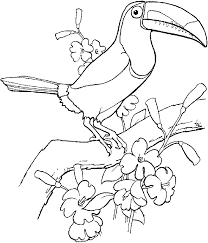 Coloring Picture Of Sulfur Breasted Toucan