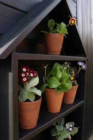 Citronella Lamp Oil Tesco by Diy The Not So Tricky Auricula Theater Heavy Heart Gardens And