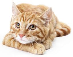 orange cat names awesome and orange cat names for your gorgeous pet