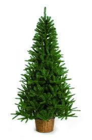 Fraser Christmas Trees Uk by Christmas Trees Uk B And M The Ft Mountain Pine Tree Flocked