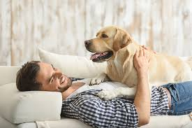 Best House Dogs That Dont Shed by The 10 Best Apartment Dogs Might Surprise You