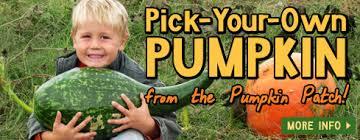 Pumpkin Patch Fayetteville Arkansas by Farmland Adventures Northwest Arkansas Corn Maze And More
