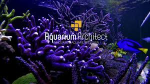 aquarium supplies online australia click and collect fast delivery