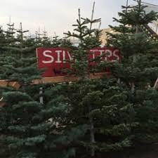 Photo Of Wonderland Christmas Trees