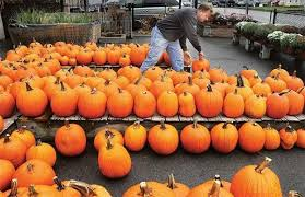 Denver Area Pumpkin Patches by The Denver Post Lists Corn Mazes Pumpkin Patches And Fall