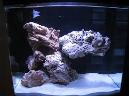 Aquascaping With PVC - General Discussion - Nano-Reef.com Community Aquarium Aquascaping Rocks Aquascape Designs Ideas Project Reef Rock 21 Dry Walt Smith Bulk Supply Review Real Generation 4 Digitalreefs News Info How To Live Purple Live Rock Youtube Updated Clear Pics Newbies Attempt At Aquascaping So Far 3reef Design Aquafishvietcom Bring Back The Wall News Builders Keeping Austin Club Walls For A Tank Callorecom River Suggestion Planted Forum