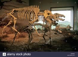 agate fossil beds national monument near harrison nebraska stock