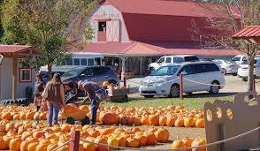 Pumpkin Patch Near Greenville Nc by Apple Farm Orchards Near Asheville And Hendersonville
