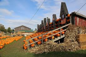 Pumpkin Farms In Southern Maryland by 11 Smashing Good Pumpkin Patches Mnn Mother Nature Network