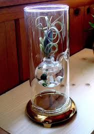 Wolfard Hand Blown Oil Lamps by Live Marimo Moss Ball And Air Plant Tillandsia Hand Blown Vintage