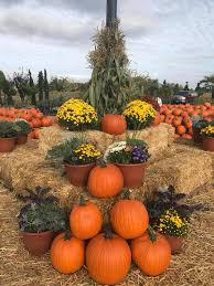 Mccalls Pumpkin Patch Employment by Sterino Farms Home Facebook