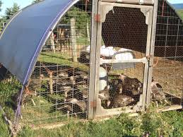 Livestock Loafing Shed Plans by Managing Multi Species Grazing U2013 On Pasture
