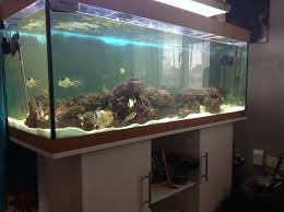 3 month juwel 400 at aquarist classifieds
