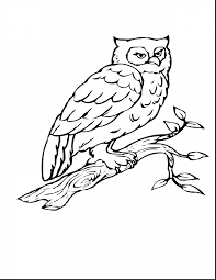 Stunning Owl Coloring Page Bird With Pages Of Birds And Migrating