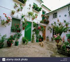 100 Decoration Of Homes Andalusia Floral Decoration Cordoba Houses Homes Dog Priego