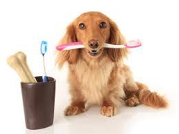 cat dental care dental care veterinarian centreville va dental care