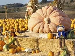 Portland Maine Pumpkin Patch by 10 Spots To Carve Out Time To Pick A Pumpkin Ziptopia