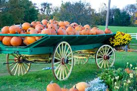 Pumpkin Picking South Nj by Where To Go Pumpkin Picking And Apple Picking In Nj
