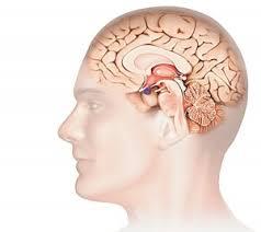 interieur corps humain femme les organes du corps humain l arche de gloire