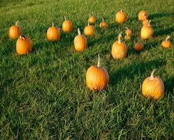 Pumpkin Patch Toledo Ohio by Hauntworld Com