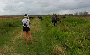 Alachua Sink Gainesville Fl by Paynes Prairie Bison And Wild Horses Yup In Florida Florida