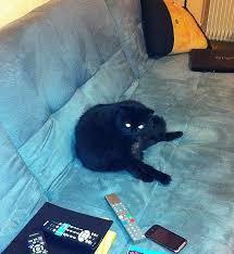 comment eviter les griffes de sur canape eviter griffes canapé luxury loisirs le topic des chats et
