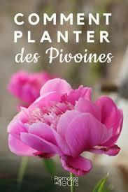 pivoine herbacee en pot planter des pivoines pivoines jardinage et jardins