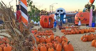 Apple Hill Pumpkin Patches Ca by 11 Socal Pumpkin Patches Where It Always Feels Like Fall L A Weekly