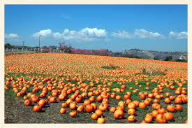 Pumpkin Patch College Station 2014 by You U0027re Invited On A Field Trip To The Cal Poly Pomona Pumpkin