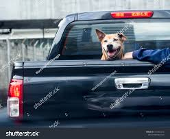 100 Truck Dog On Black Pick Back Stock Photo Edit Now 1157831212