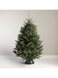 John Lewis Partners Fraser Fir Real Christmas Tree