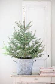Potted Christmas Trees For Sale by Bread U0026 Olives Allthingsgirlyandbeautiful Nicole Franzen