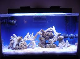 Image Result For Tonga Branch Aquascape | 40 Aquascape | Pinterest ... 75 Gallon Tank Aquascape Ideas Please Reef Central Online Community Minimalist Aquascaping Page 3 2reef Saltwater And How To A Aquarium Youtube Tank Rockscape To Drill Cement Your Live Rock Gmacreef Columns In A Saltwater Callorecom Pieter Van Suijlekoms Revisited Is There Science Live Rock Sanctuary The Why I Involuntarily Redid My Mr 7