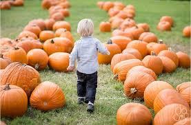 Pumpkin Farm Illinois Best by 10 Milwaukee Area Pumpkin Farms To Visit This Fall