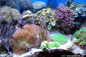 aquarium nano eau de mer en eau de mer manuel aquarium marin récifal