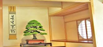 bonsai und tokonoma luxurytrees asiatische wohnzimmer homify