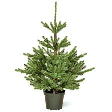 Prelit Christmas Trees Pre Lit Led Lowes White Tree Walmart Slim